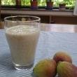鉢植えイチジク 収穫!