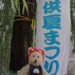 8月6日に東山、白川で開催される、金魚すくいで有名な「白川子供夏まつり」のために川の美化活動を