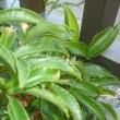 元気な植物-万