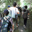涼しい箕面滝道、キノコ観察。(科学部・部活動)