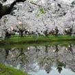 """みちのくの""""桜""""と名所めぐり 弘前城の桜 ④"""