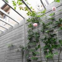 お庭のリフォーム「アコヤのデッキパーゴラの庭」