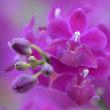 蘭の花色々(Ⅲ)