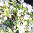 新緑の季節 作並温泉「ゆづくしSalon一の坊」