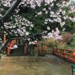 春のバスツアー 海津大崎クルージング