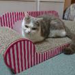 このソファーは、快適にゃん\(^o^)/
