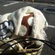 老犬ラスさん動物病院へ 今日はバリカンデー ニャハハ(*^▽^*)