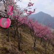 真木お伊勢山の桜~大月市①