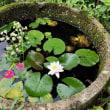 コンクリート丸池