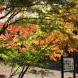 泉自然公園~~紅葉!