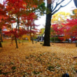 永観堂の紅葉 ・・・ 京都