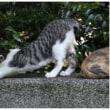 外猫が庭に入らない方法〈 入門編 〉