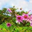 『季節の風景』 マリア道
