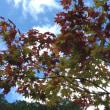 恒例の秋の石鎚スカイラインへ