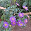 小石川後楽園の花・・・・