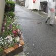 雨の日はつまんないなあ 180424