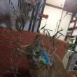 福笹と福猫。