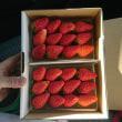 山城のイチゴ