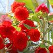 水戸植物公園の草花