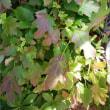 秋の若葉が美しくて。