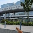 博多港と愛犬