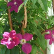ささやかな庭の花々に感謝!