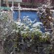 一関市我が家の雪景色  2017年11月19日(日)