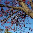 ポプラ並木とホルスタイン。