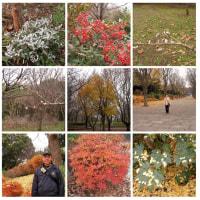 20061216青葉の森