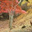 ♪~みたけの森~♪