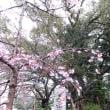 春の雨の一日