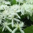 良い香りの花