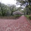 藤崎台球場で高校野球を満喫・樟の葉のじゅうたんも