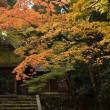 法然院の秋