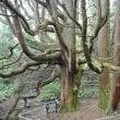 波野のそば畑 高森殿の杉
