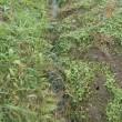 排水路の土上げをしました