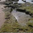 沖縄を愛でて(3)  瀬名波ガー(湧き水の泉)の浜辺で