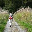 豪華‼ 上高地から栂池高原まで紅葉秋満喫の旅