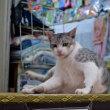沖縄・7月のゆがふ、最終回 猫のいる場所・・写真48枚