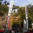 来宮神社  @熱海   神木からパワー