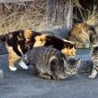 登茂山の野生捨てネコ軍団