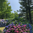 大阪府北部で地震&ゆり園