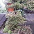 台風が過ぎました