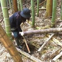 【関西中国】中坪・竹林整備&タケノコ掘り