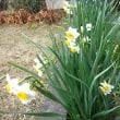 立春そして寒い日々