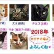 窓際族の猫