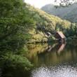 ё えさをキャッチした、カワセミの姿、ドキドキ眺め ё M池(岐阜県岐阜市)