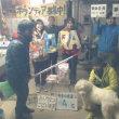 わんにゃん報告Blog-11/26~12/2