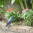 この鳥の名前を教えてください。