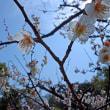 城南宮 弥生の観梅-03~椿も梅と共に鑑賞